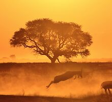Nature Sunset of Gold - African Wildlife Background  by LivingWild