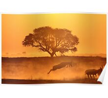 Nature Sunset of Gold - African Wildlife Background  Poster