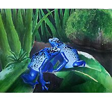 Blue Frogs Photographic Print