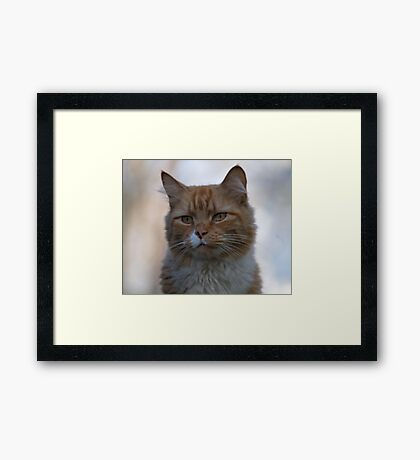 Not Happy about Posing Framed Print