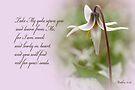 Rest ~ Matthew 11:29 by Robin Clifton