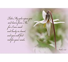 Rest ~ Matthew 11:29 Photographic Print