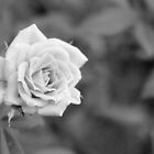 Beautiful in Black and White by aprilann