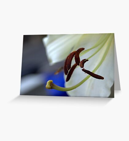 experimental closeup of a white lily Greeting Card