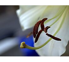 experimental closeup of a white lily Photographic Print