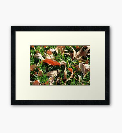 Foliage and Grass Framed Print