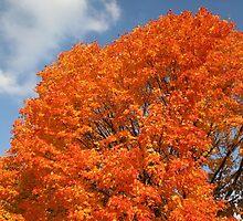 Flaming Tree by Linda Jackson