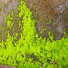Moss on ground at rear of Old Courthouse in Kilmore VIC  by Margaret Morgan (Watkins)
