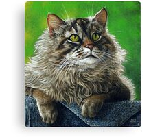 Beautiful Maine Coon Cat, painting Canvas Print