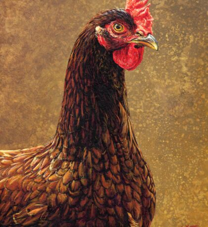 Rhode Island Red Hen, painting Sticker