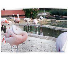 Sleeping Flamingo Poster