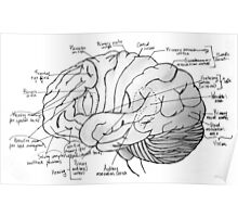 Labeled Brain Poster