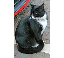 A Cat and a Car Photographic Print