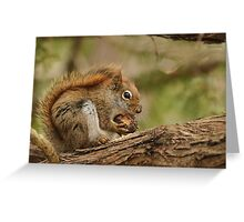 My day is nuts Greeting Card