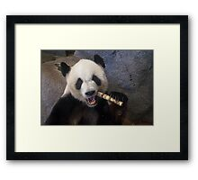Smiling Panda Framed Print
