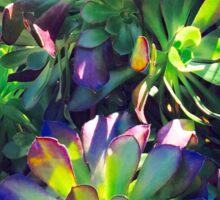Succulents, Royal Botanic Gardens Sticker