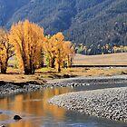 Yellowstone Gold. by Ann  Van Breemen