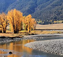 Yellowstone Gold. by Ann  Van Breemen