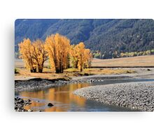 Yellowstone Gold. Canvas Print