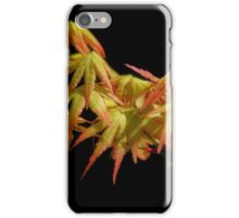 Japanese Maple-7960 iPhone Case/Skin