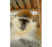 Wise Monkey - Nature Photography Photographic Print