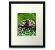 """Smile!"" Eastern Box Turtle painting Framed Print"
