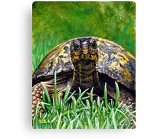 """Smile!"" Eastern Box Turtle painting Canvas Print"