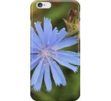 Chicory Flower iPhone Case/Skin