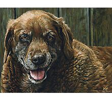 Old Smiling Chocolate Lab, painting Photographic Print