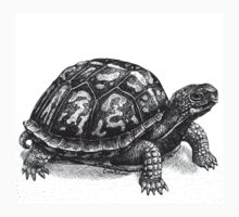 Pen and Ink Eastern Box Turtle, drawing One Piece - Short Sleeve