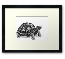 Pen and Ink Eastern Box Turtle, drawing Framed Print