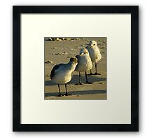 Stop Following Me, I'm Not Your Leader !!! Framed Print