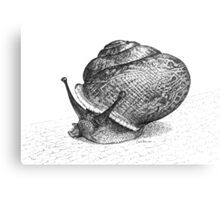 Pen and Ink Snail, drawing Canvas Print