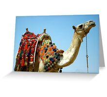 Colorful Camel Greeting Card