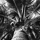 Coconut Palm by njordphoto