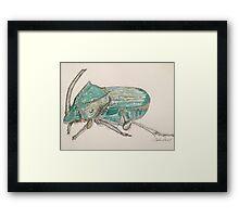 Rainbow Scarab Beetle in colour by Liz H Lovell Framed Print