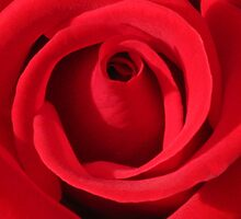 My Love is Like a Red Rose by Marilyn Harris