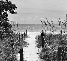 Pathway to the Sea by Bill Wetmore