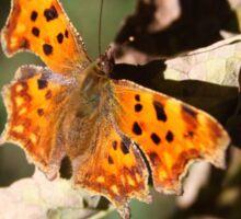 Comma Butterfly in Fall Sticker