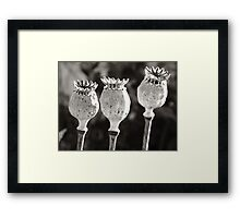 Poppy Tops  Framed Print