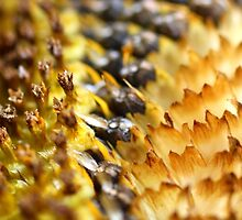 Sunflower Seeds Abstract by StonedOgraphy