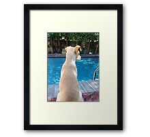 My New puppy Lola Framed Print