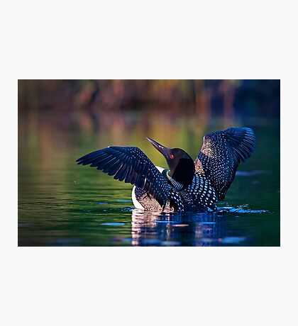 Rise 'n shine - Common loon Photographic Print