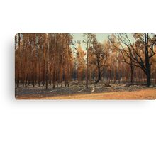 After the Fire Canvas Print
