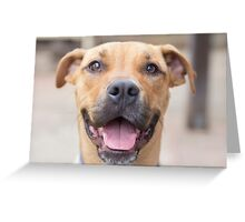 Angel - Dog Greeting Card