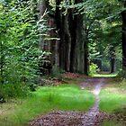 Walking under mid-September trees again by jchanders