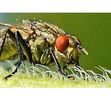 Flies Face 2 Photographic Print