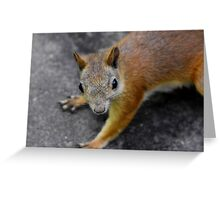 the eyes' of a ... squirrel Greeting Card