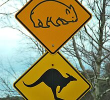 Beware of Cute Wombats and Kangas by Penny Smith