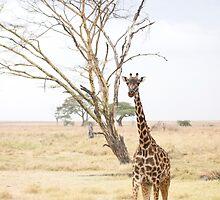 Tanzanian Giraffe by Natalie Broome